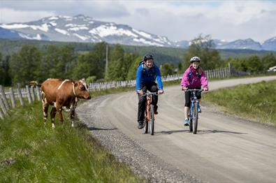 The cycling route Mjølkevegen was votet one of Norway's most beautiful. It mostly runs through Valdres' high mountain areas