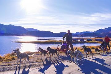 Dog sledding on wheels at the feet of the Jotunheimen National Park