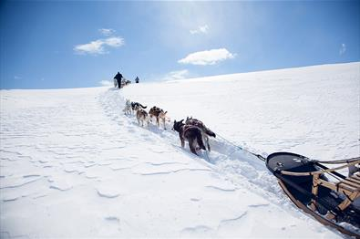 Beito Husky Tours - Musher Experience 2 days expedition